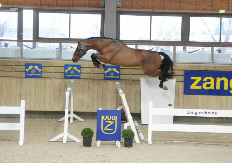 26 Stallions approved at Z-France